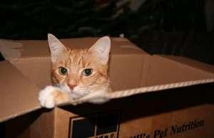 收养流浪猫咪的注意事项